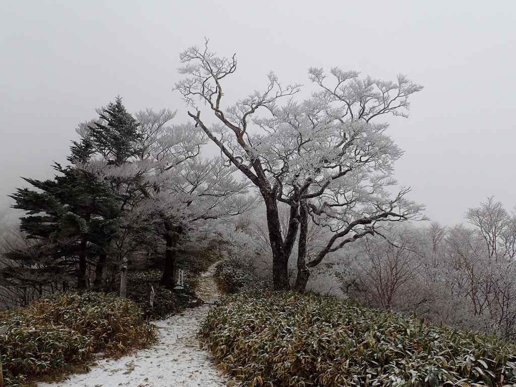 夜明峠ガスって石鎚は見えない 雪が多い年は全面真っ白になる