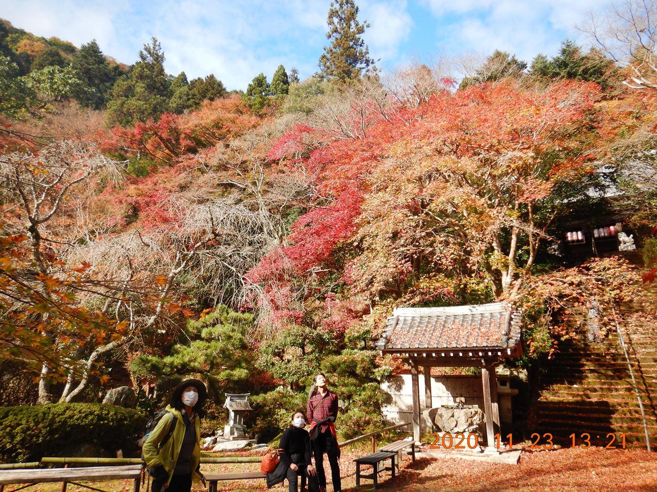 【個人山行】京都西山紅葉狩りハイク(2020.11.23)